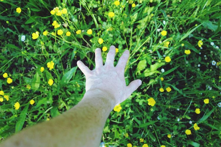 NATURE CONEXION Human Hand Human Body Part Human Finger One Person Personal Perspective Green Color Close-up Real People Outdoors Day Nature Grass One Man Only People Freshness Adult The Great Outdoors - 2017 EyeEm Awards Tree Scenics APOLO 3XSPUnity Live For The Story EyeEmNewHere