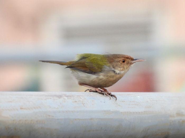 Bird perching on a railing