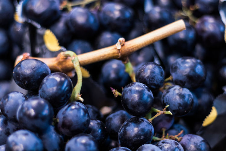 Stock Grapes Bunch Of Grapes Food And Drink Freshness Market Nature Plants Vegetable Market Vegetables & Fruits Axvo Blue Close-up Focus On Foreground Food Food And Drink Fresh Freshness Fruit Fruits Grapes Healthy Eating Market Place Nature Tasty Vegetable Vegetables