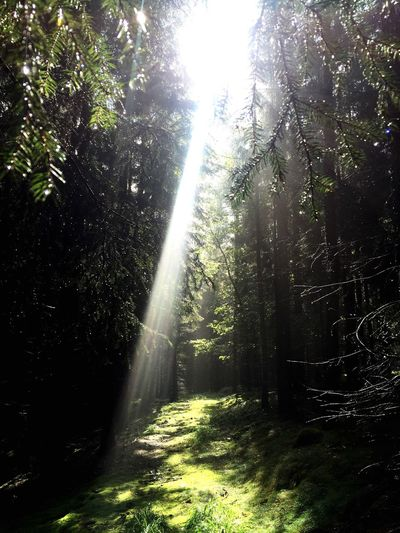 Light And Shadow In The Forest In The Woods Forest Light Beam Light In The Forest Green Green Leaves Sunlight Sunlight Through Trees
