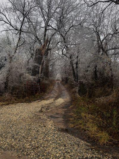Rural Lane The