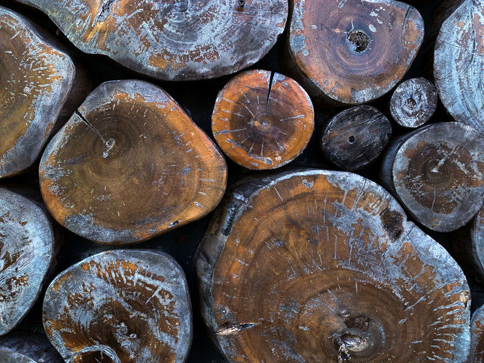 A cut piles of logs from the deep jungle of borneo, indonesia.