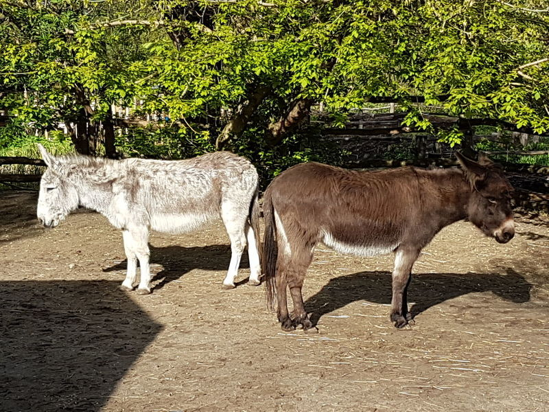 Animal Themes Donkey Photography Donkey Donkey Animals Burrow Two Donkeys Together Together Forever Friends Friends For Life  Friendly Standing Still Still Standing Animal Photography You And Me You And I Agriculture Photography Farming Donkey On Donkey