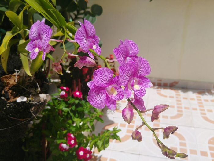 Nature Photography Flower Freshness Plant Petal Pink Color Purple Blossom Flower Head Selective Focus Focus On Foreground Day Beauty In Nature Fragility In Bloom Close-up Orchid Blossoms Orchids Orchid Flower