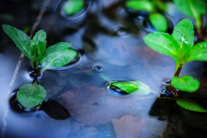 Floating On Water Leaf Water Green Color Plant Growth Nature High Angle View Reflection Wet No People Drop Outdoors Close-up Day Beauty In Nature Lily Pad Animal Themes Fragility Freshness Petal Flower Growth Nature Selective Focus