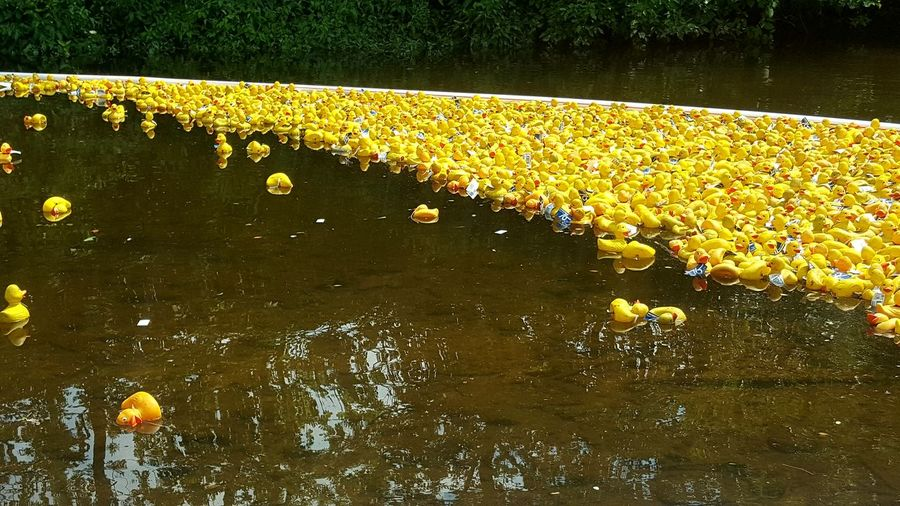 Yellow flowers floating on water