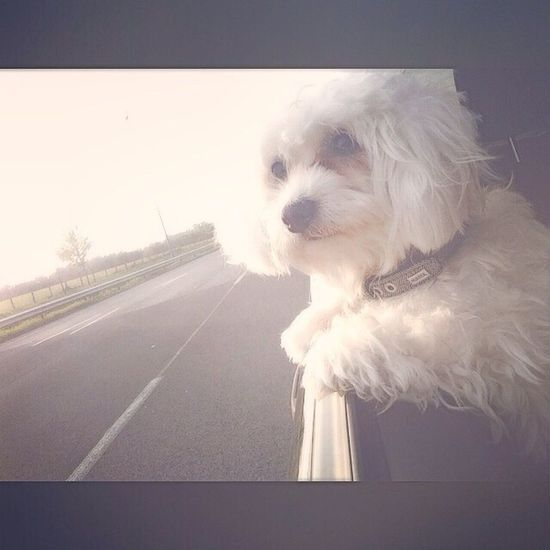 Bubu I Love My Dog Dog Love So Sweet ♥