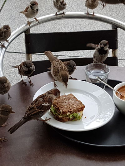 Breakfast Breakfast Time Bread Coffee Coffee Time Birds Action Stolen Natur Background Cover City City Street Sparrow Sparrows Clochard Thiefes Thieves Thief Cooperation FUNNY ANIMALS Animals Hungry Adapted To The City Visual Feast