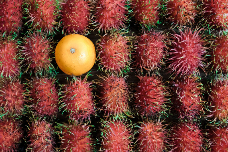 Choice Orange Rambutan Tropical Fruits Abundance Backgrounds Close-up Contrast Contrasting Colors Food Food And Drink Freshness Fruit Full Frame Healthy Eating High Angle View Lychee Red Retail  Ripe Still Life Succulent Plant Tropical Fruit Wellbeing