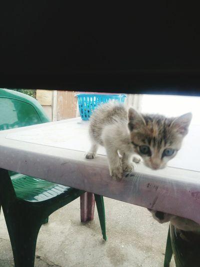 Wildandnewlife Small Lion Cutething A New Beginning Pets Feline