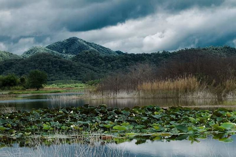 Reflection Cloud - Sky Nature Lake Beauty In Nature Water Plant Landscape Outdoors Sky No People Tree Scenics Mountain Day Grass Flower
