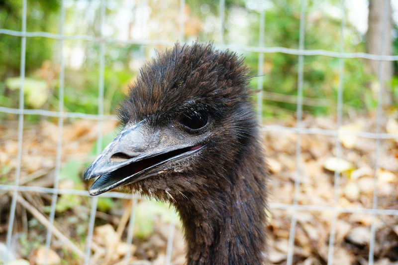 Close-up of ostrich on outdoors