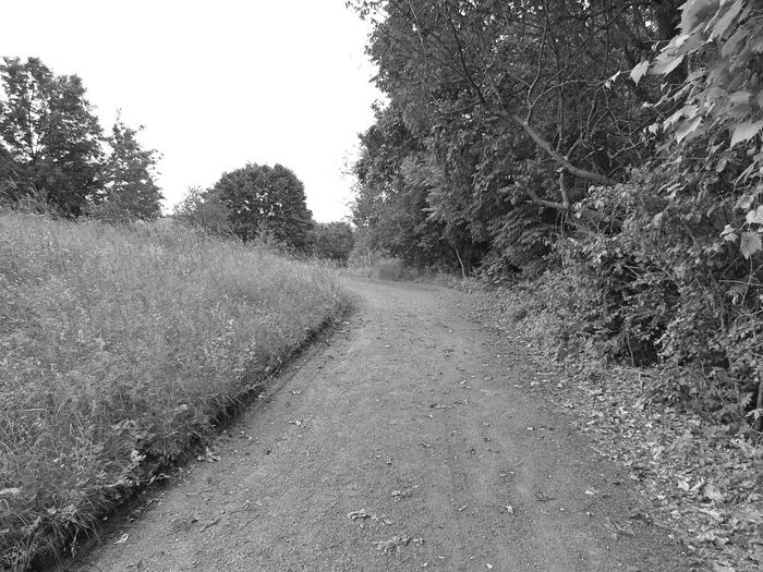 Road amidst trees on landscape