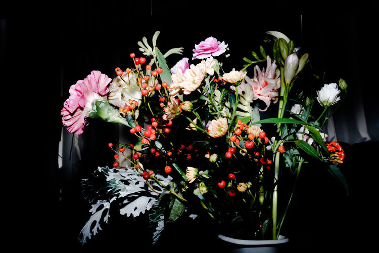 Beauty In Nature Black Background Close-up Colors Day Flower Flower Head Fragility Freshness Growth Nature No People Outdoors Red