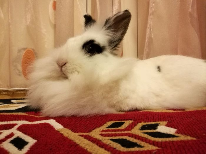 Pets Domestic Animals Bunny 🐰 One Animal Bunnygirl Animal Themes Animal Head