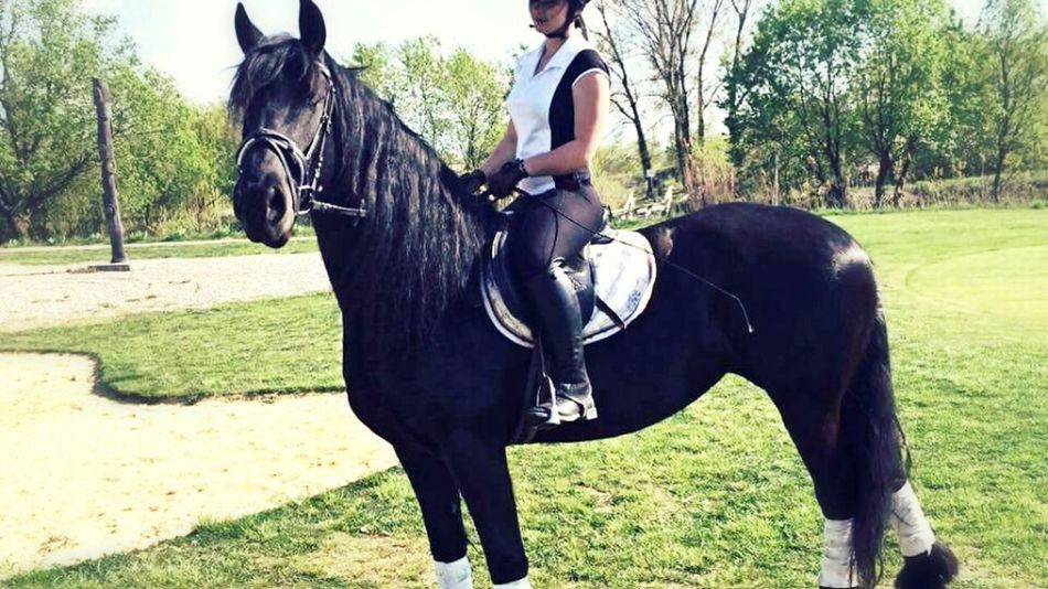 Friesian Horse Mare 4yearsold Loveher LoveRiding Equestrian That's Me