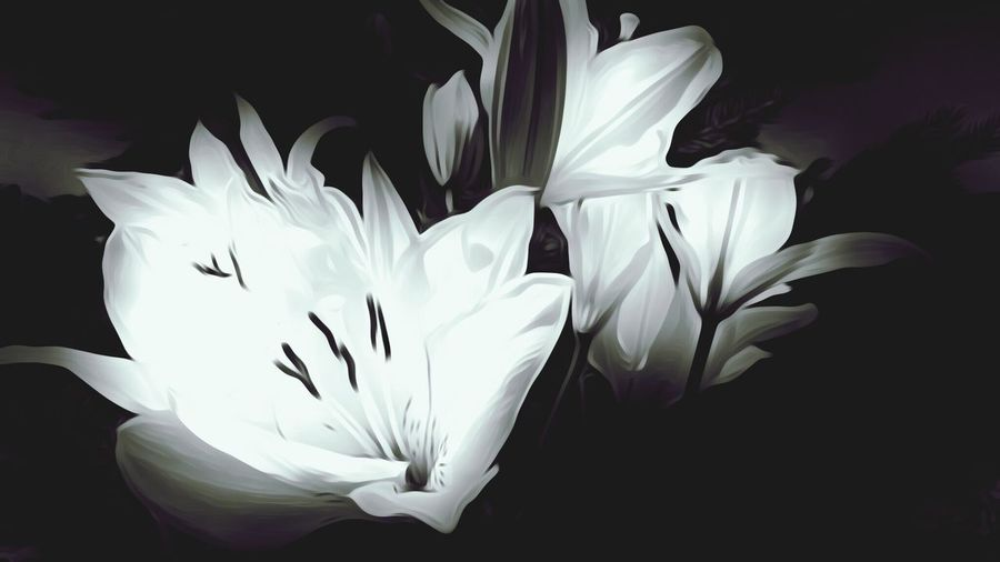Flower Freshness Fragility Petal Flower Head Close-up Growth Beauty In Nature White In Bloom Stem Blossom Softness Nature Macro Bloom Springtime Single Flower Black And White Weddinginspiration Lily Flower Lily Of The Valley Lily @rt White Flower Black And White Collection