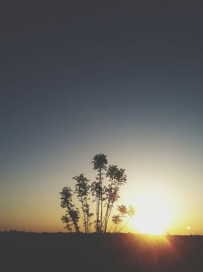 Sunrise Tree Sky_collection Eye4photography