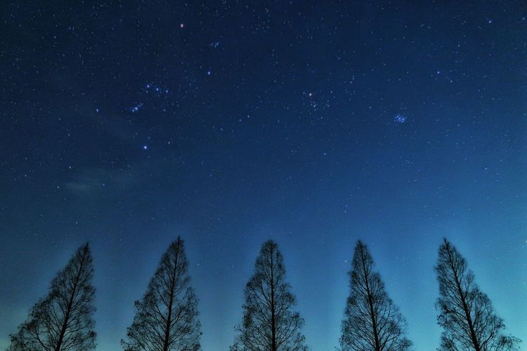 🌲🌲🌲🌲🌲メタセコイヤ並木の下で✨ 星 星空 木 並木道 夜景 空 風景 Japan Photography EyeEm Best Shots 自然 EyeEm Galaxy ライトアップ EyeEm Nature Lover EyeEm Gallery 海 Star Star - Space Car River Astronomy Galaxy Milky Way Tree Star - Space Space Constellation Cold Temperature Snow Space Exploration