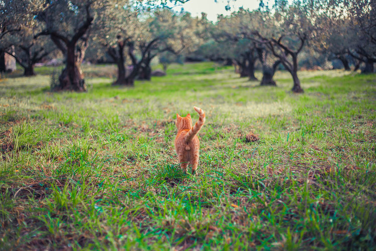 Rear view of cat standing on grassy field