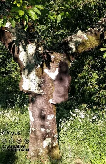Outdoors Streamzoofamily TheVille Green Green Green!  Outdoor Games One Animal Miau *-*  Cats Of EyeEm Gatto Crazy Cat Feline Love My Cat❤❤❤🐱🐱🐱 Cat♡ Neko Climbing Trees Cat Lovers