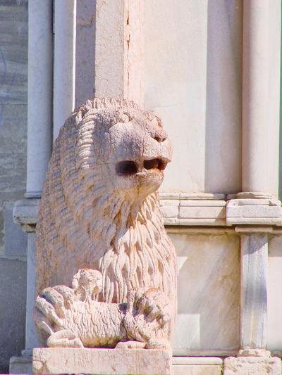 Ancona Cathedral Italy Lion Medieval Romanesque San Ciriaco Sculpture Statue
