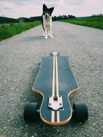 Border Collie Country Road Dogs Fun Ilovemydog Longboard Vanishing Point