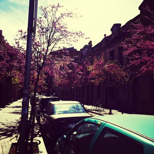 Pink Trees Pink Trees City Street Cars Barcelona