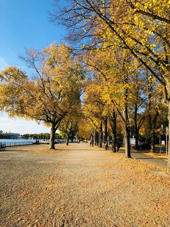 Autumn Herbst Fall Autumn Tree Plant Beauty In Nature Nature Land Tranquility Day Outdoors Growth No People Yellow Landscape Beach Autumn Scenics - Nature Environment Sky Tranquil Scene Sunlight Idyllic