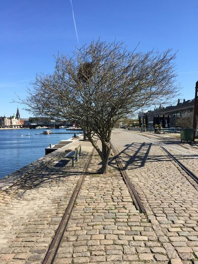 Tree Railroad Track Railroad End Of Line Endofline Track Tracks In The Way Blue Sky Sky Waterfront If Trees Could Speak