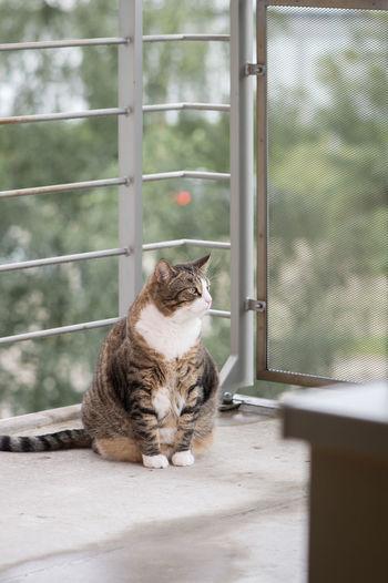 Cat sitting outdoors on balcony