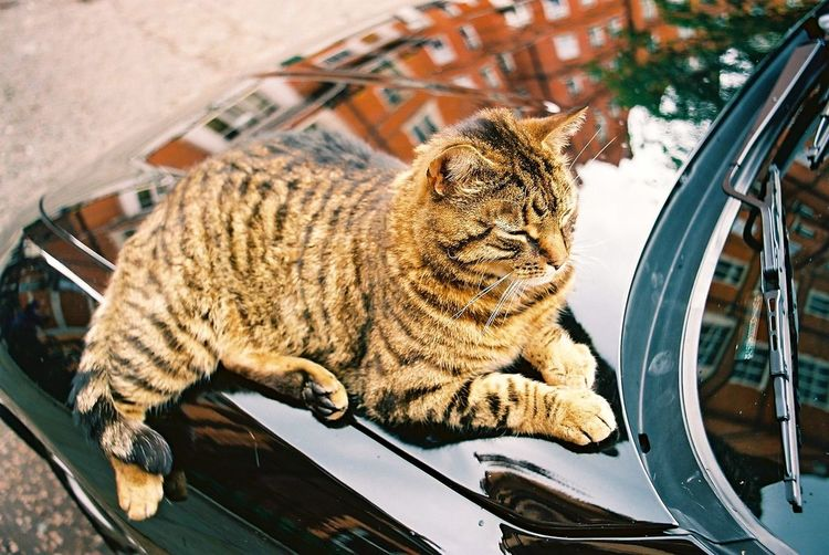 High angle view of brown cat relaxing on black car