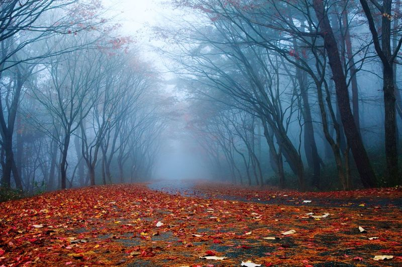 EyeEmNewHere Autumn Leaf Fog Nature Beauty In Nature Tree Forest Landscape No People Red EyeEm Nature Lover EyeEm Landscape The Week On EyeEm