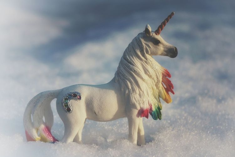 Outdoors November 2017 Close-up Toyphotography Toyhorse Horse Toy Unicorn Farytaile Snow Blue Horse Photography  Iceland Tranquility Cold Temperature Havingfun Photo Of My Daughter's Favorite Toys