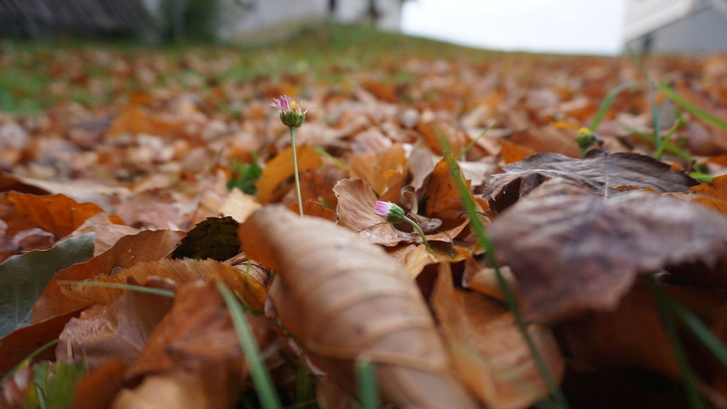 autumn mood #2 Nature InTheMiddleOfNoWhere Autumn Flowers Colourfulleaves Close-up Plant