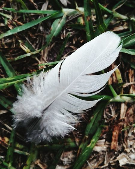 Feather  Imagination by FeBird when walking with my 3years and 9months daughter, she found it and asked to take a photo for it.