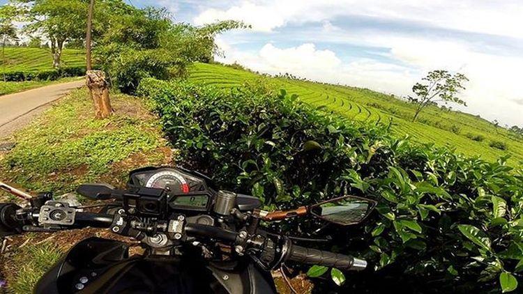 Teaplantation Teagarden Motorcycle Kawi Kawination Kawasakiz250 Kawasaki Z250 Nakedbikenation NakedBike Eatsleepshift🔃 Gopro Gopro3plus Goproblackedition Goproeverything Goprooftheday Goprohero3 Gopro_moment Val  2015