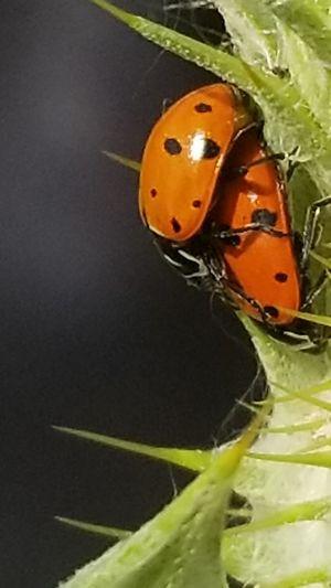 Ladybug Studio
