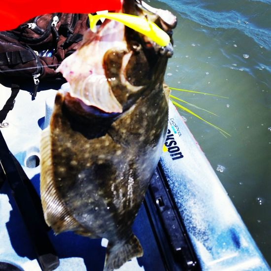 Charleston Flounder Lowcountry Kayak Anglers Yakfish Redfish