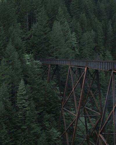 Bridge by pine trees in forest