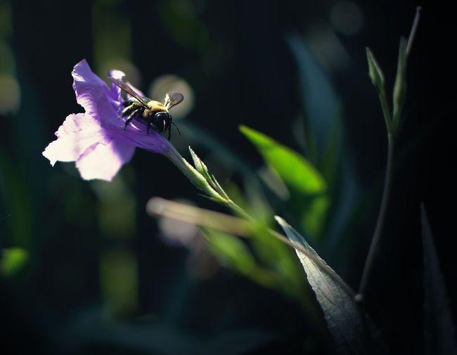 Louisiana Louisiana Living New Orleans Pollen Pollinate Pollinated Pollinater Portrait