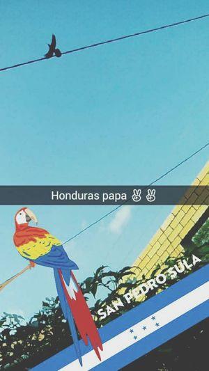 Honduras Hello World Snapchat