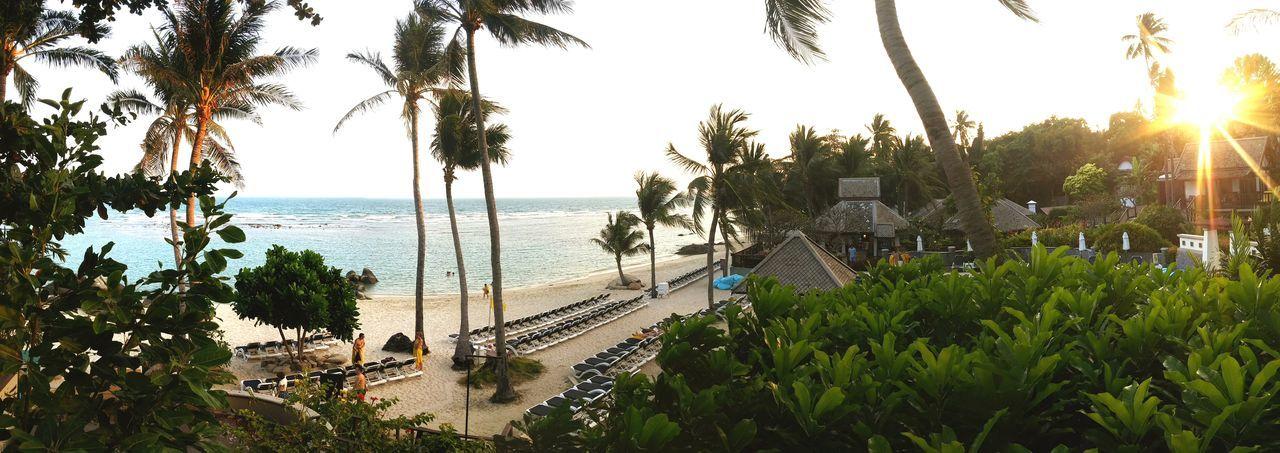 Beautiful Surroundings Holiday Relaxing Sunset Sand Palm Trees Enjoying Life Beachphotography