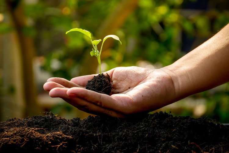 Human Hand Hand Growth Human Body Part Plant Holding One Person Dirt Focus On Foreground Nature Real People Gardening Close-up Seedling Day Lifestyles Outdoors Beauty In Nature Plant Part Care Finger Planting Human Limb