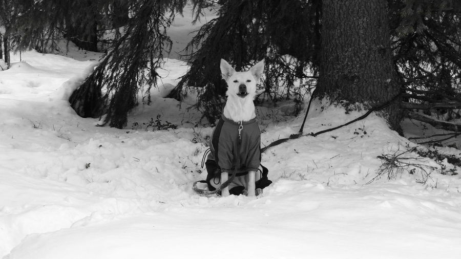 Portrait of dog on snow covered landscape