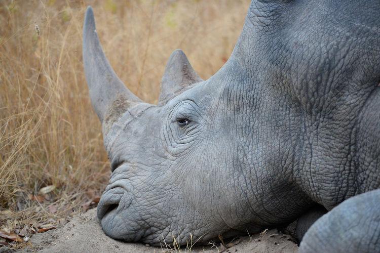 Close-up of elephant on land