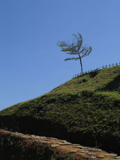 Tree on hill against clear blue sky