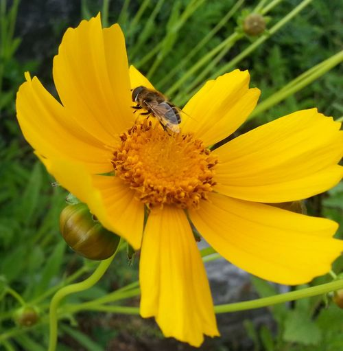 If there is a flower, there'll be a bee Insect Petal Animal Themes One Animal Yellow Animals In The Wild Flower Freshness Wildlife Fragility Flower Head Close-up Beauty In Nature Pollination Season  Growth Springtime In Bloom Nature Bee
