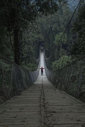Rear view of person walking on footbridge in forest