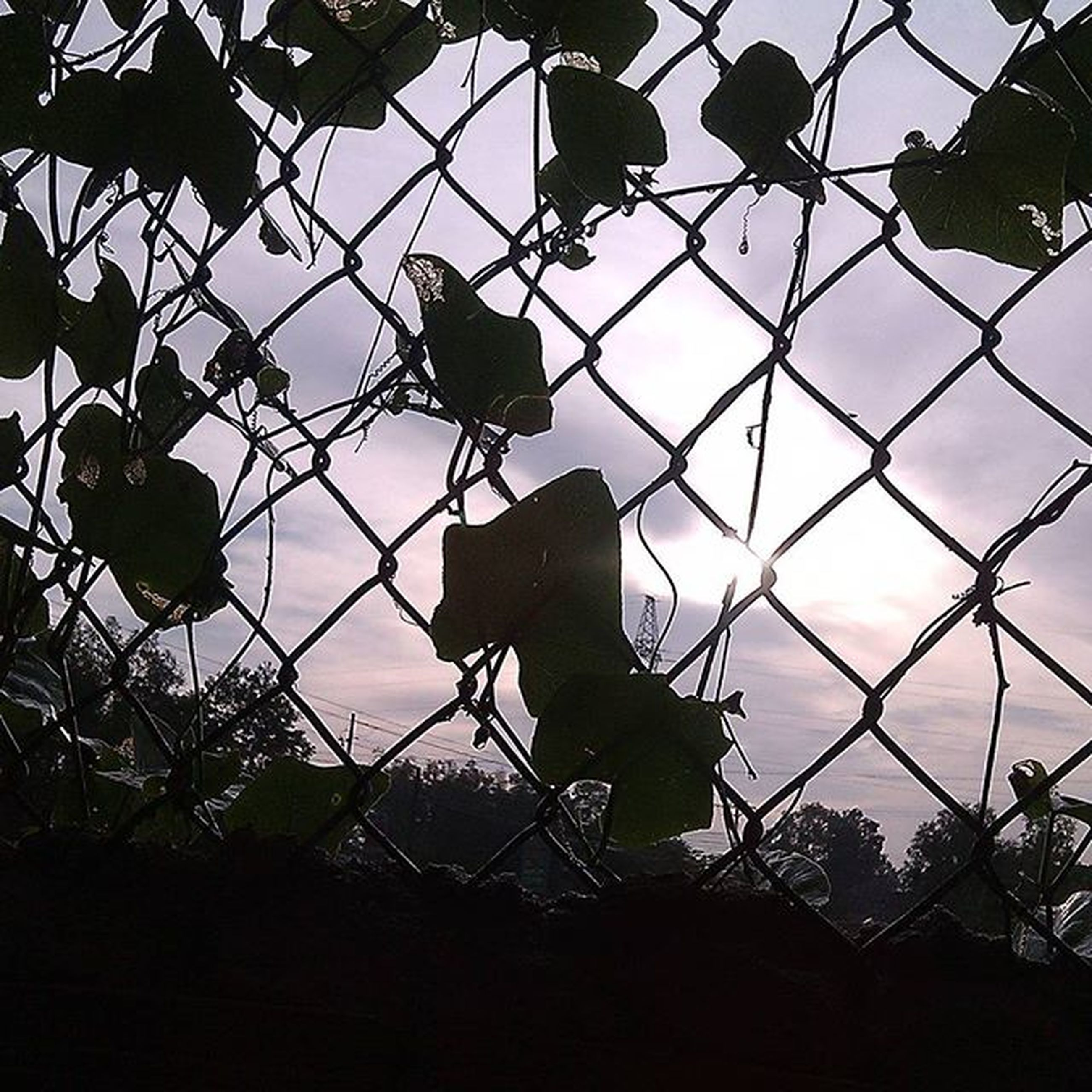sky, branch, focus on foreground, chainlink fence, security, tree, protection, fence, safety, silhouette, low angle view, close-up, metal, building exterior, leaf, built structure, plant, no people, growth, architecture